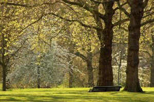 The green trees of spring in a London park