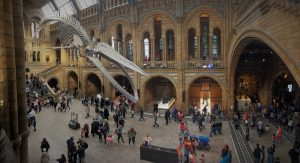 The blue whale in the Natural History London museums for kids